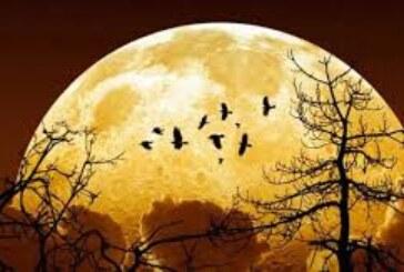 جمع بندی کلیه مقاله های نجومی فصل پنجم – ماه و زمین
